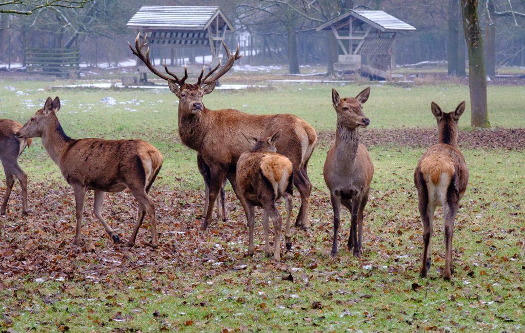 Besuch im Wildpark Rheingönheim