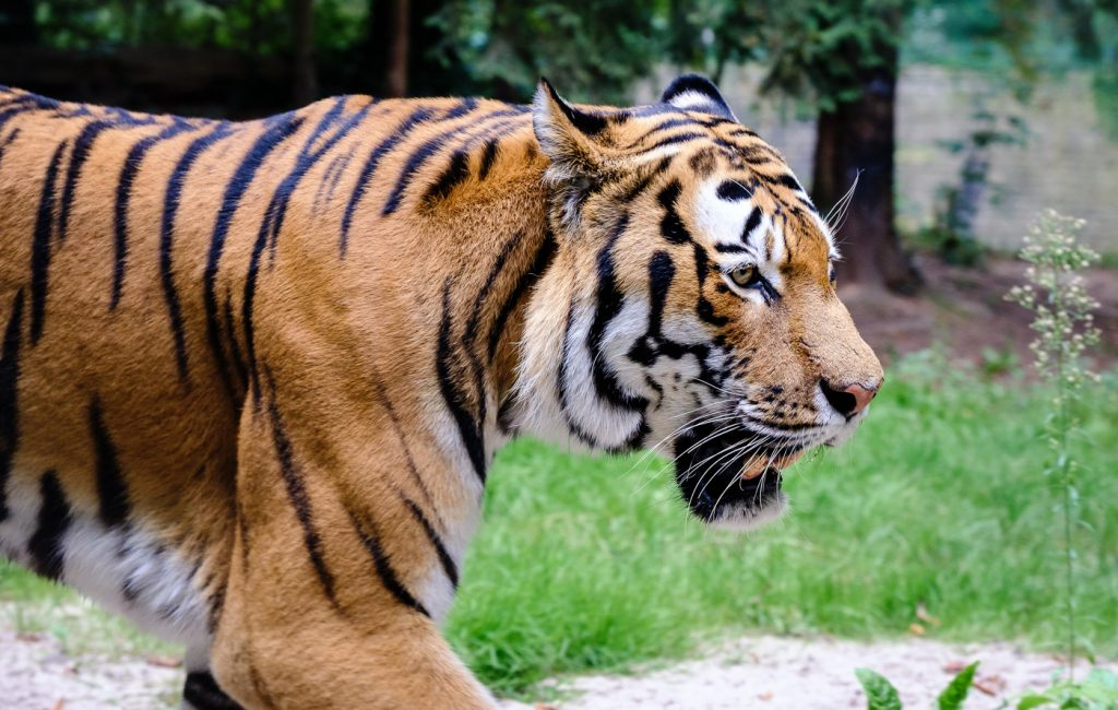 Besuch im Landauer Zoo