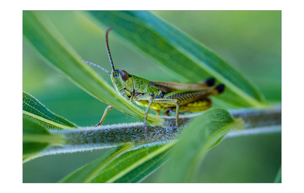 Auf Insektenjagd …