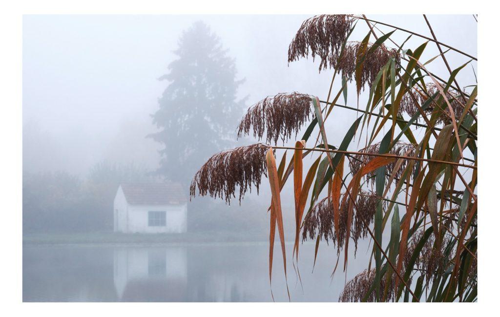 Nebelbilder