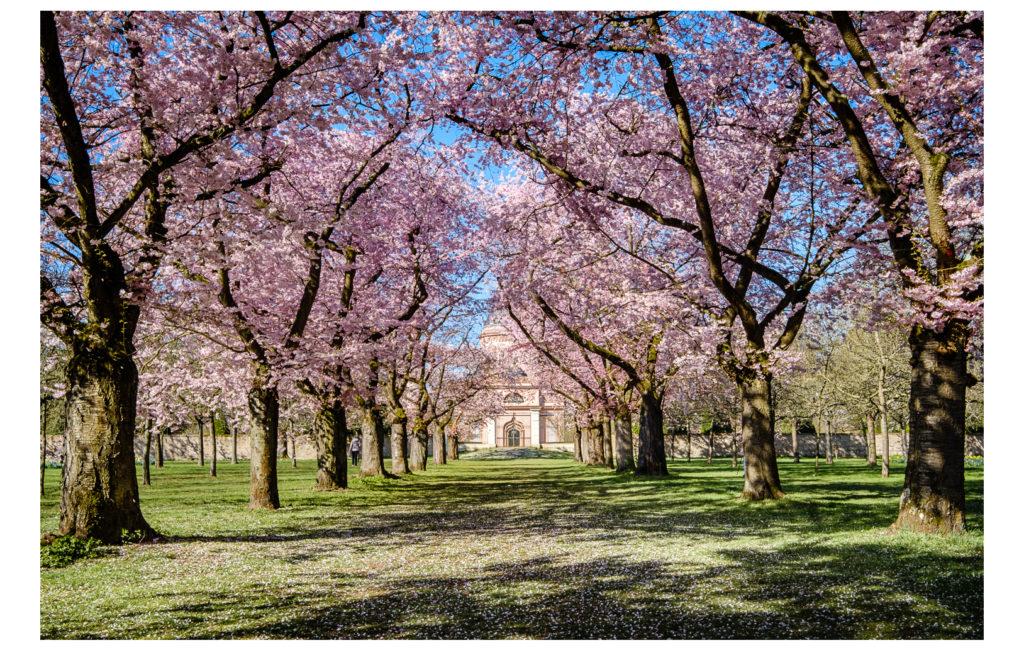 Schwetzinger Schlossgarten – Kirschblüte und mehr …