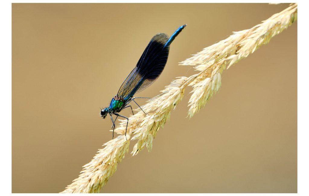 Libellen-Safari II