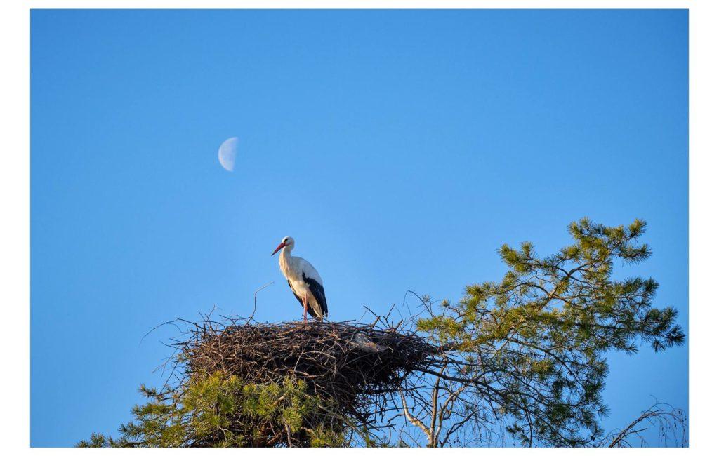 Besuch im Vogelpark