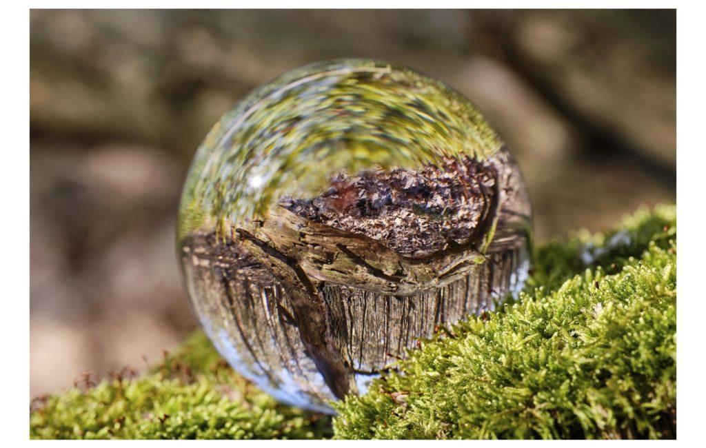 Wald-Fotografie – ganz schön schwierig