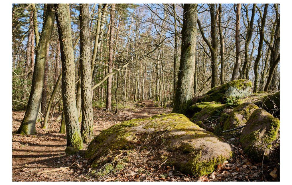 Fotospaziergang im Pfälzer Wald