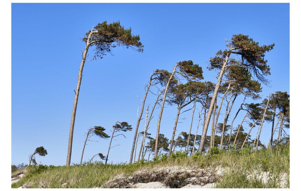 Ostsee-Urlaub Teil 1: Ostseeküste und Darßwald