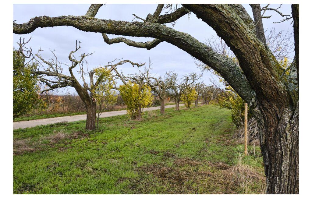 Felder und bizarre Bäume
