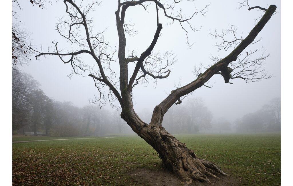 Nebel im Herrnsheimer Schlosspark …