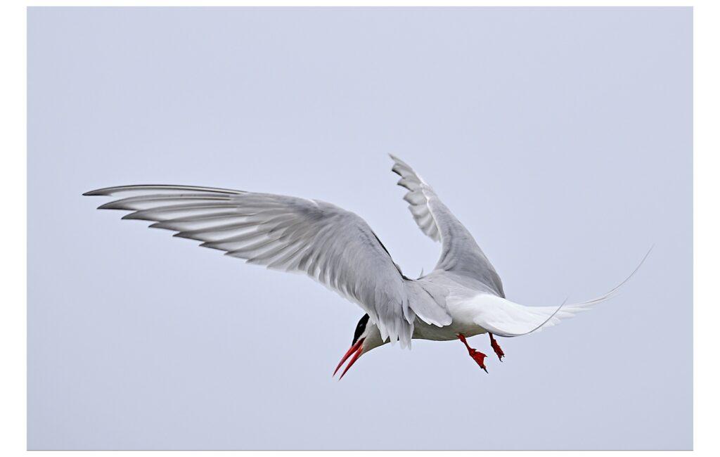 Vogelfotografie am Eider-Sperrwerk